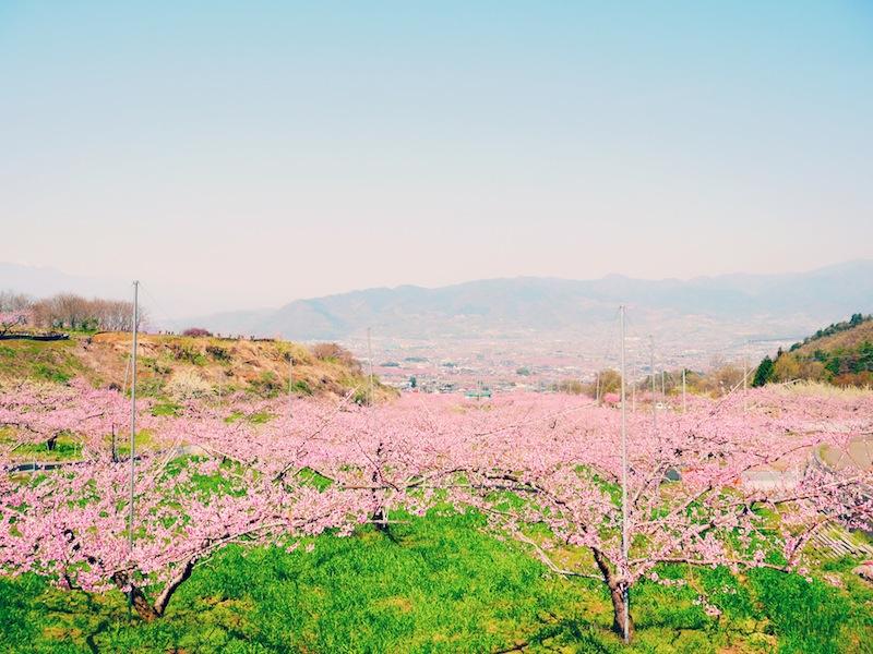 harurun4-image005