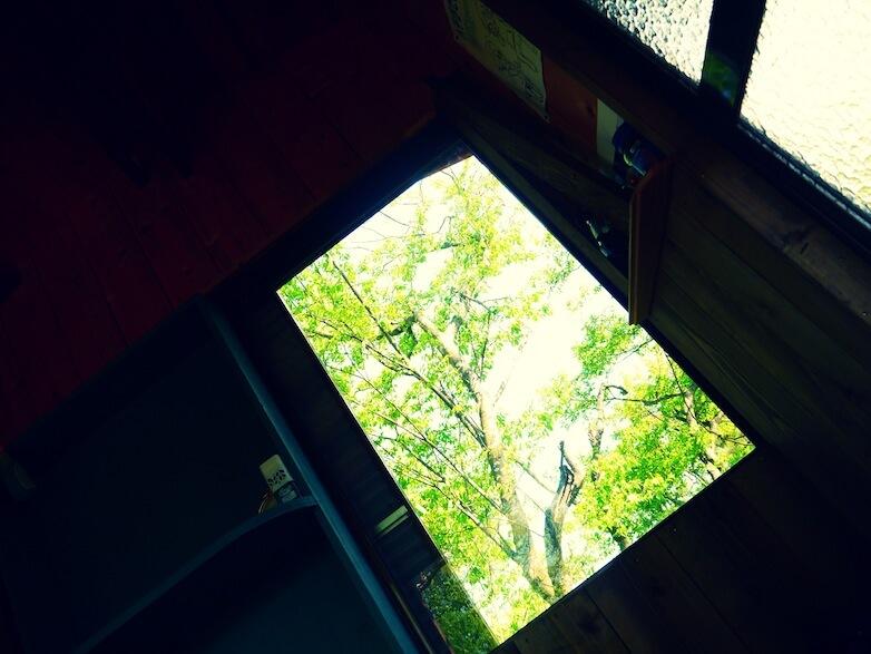 窓から差し込む木漏れ日 で目が覚め。