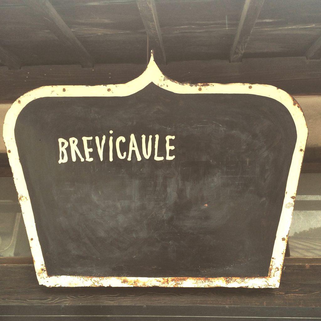 とにかく美味しいから絶対行ってみて!とオススメされていたBrevicauleさんはあいにくの定休日。夜は甲府駅北口のd&department Yamanashiで食事を。子連れにも優しく、山梨産の野菜や肉を堪能できるので重宝しています。