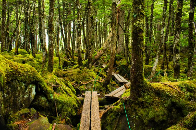 白駒池周辺の苔の原生林は圧倒的